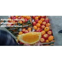 Egyptian Fresh orange thumbnail image