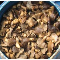 salted oyster mushrooms thumbnail image