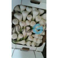 Fresh Garlic suppliers, Fresh Garlic Egypt