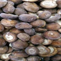 Frozen Mushrooms with good price