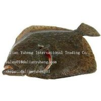 FROZEN TURBOT FISH