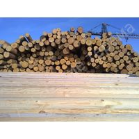 Round siberian larch,cedar logs directly from siberia