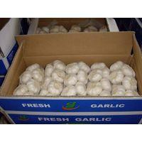 red fresh garlic