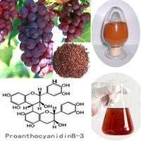 Grape Seed Extract 95% Proanthocyanidins thumbnail image