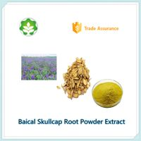qualified skullcap root extract powder from China