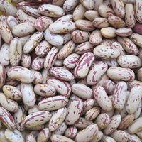 Light Speckled Kidney Pinto Beans thumbnail image