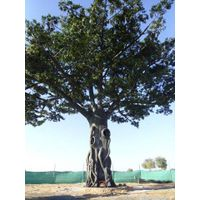 Artificial Big Banyan Tree