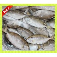 frozen seafood IQF 4-6pcs/kg whole round/headless rabbit fish (Siganus Canaliculatus)