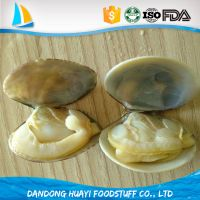 high quality frozen boiled short necked clam meat