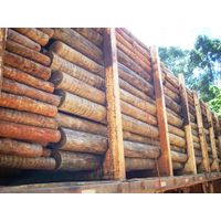 Eucalyptus logs thumbnail image