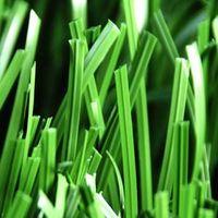 Double-stem grass,soccer grass