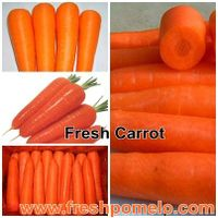 canned carrot,dry carrot,frozen carrot,carrot