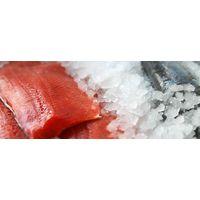 Fresh Halibut, Salmon, Albacore, and More
