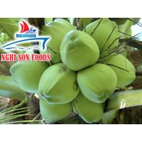 Coconut From Vietnam (0084 905179759)