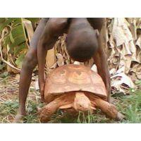 Live Tortoises