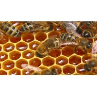 Honey, wax, bee bread, pollen, propolis