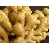 Fresh Ginger(various sizes)