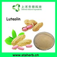 Peanut shell extract Luteolin 50%-98%