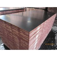 Film Faced Plywood/Commercial Plywood/Construction Plywood