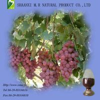 Grape Seed Extract-Kosher certified Manufacturer