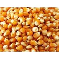 Yellow and White Maize Available.