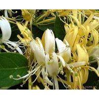 Honeysuckle Extract - Chlorogenic Acids 5% - 98% thumbnail image