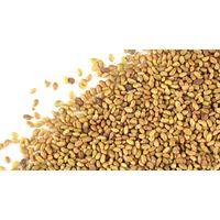 Alfalfa Seed for Medicinal Use