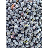 Organic blueberry extract anthocyanidins manufacturer & supplier 1%,5%,25%,UV