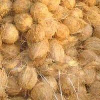 Mature Coconut thumbnail image