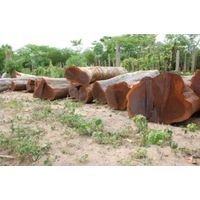 Brazilian Ebony / Guayacan on Logs