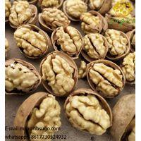AAA 185 Paper-Shell Walnut Inshell