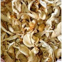 Dried Edible Mushrooms ( Fungus )