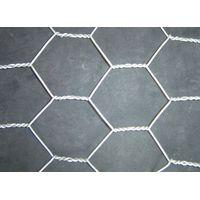 China most popular hexagonal wire mesh factory price