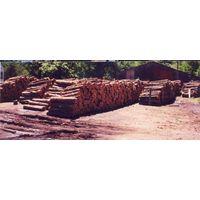 Softwoods thumbnail image