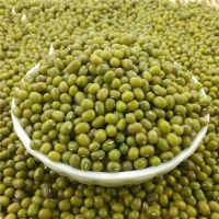 Fresh Green Mung Beans