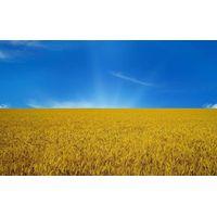 Feed wheat,Barley ,Corn,Soi thumbnail image