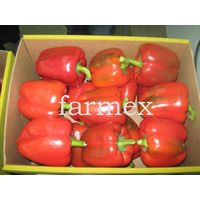 Capsicum (sweet pepper)