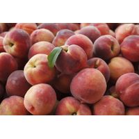 Peach Fruits thumbnail image