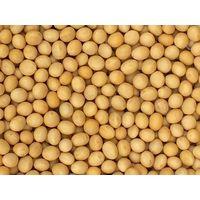 Buy 100% Pure Soy bean wholesale thumbnail image