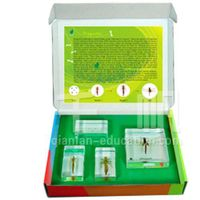1704 Qianfan Life Cycle of Dragonfly Intelligence Kids Specimen Toys for Children