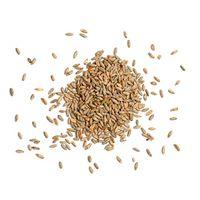 Wheat grain thumbnail image