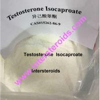 Sell Testosterone Isocaproate 15262-86-9 For Bodybuilding thumbnail image