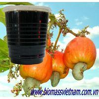 Cashew nut shell liquid best price
