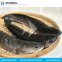 EEL - FROG - BULLHEAD - SNAKEHEAD - ROHU - FROZEN FISH - VIETNAM