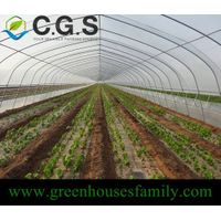Single Cold Frame Greenhouse thumbnail image
