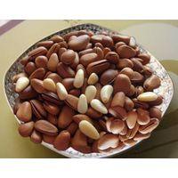 Pine Nut Kernels For Sale thumbnail image