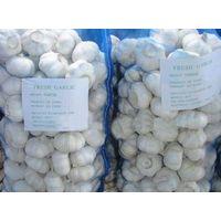 fresh vegetable Garlic thumbnail image
