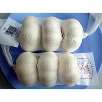 fresh garlic normal white garlic thumbnail image
