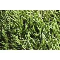 Welcome to visit our artificial lawn thumbnail image