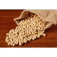 Best Quality Whole Soybeans, beans, soy beans